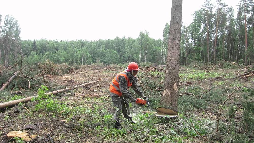 Разрешенные к вырубке деревья