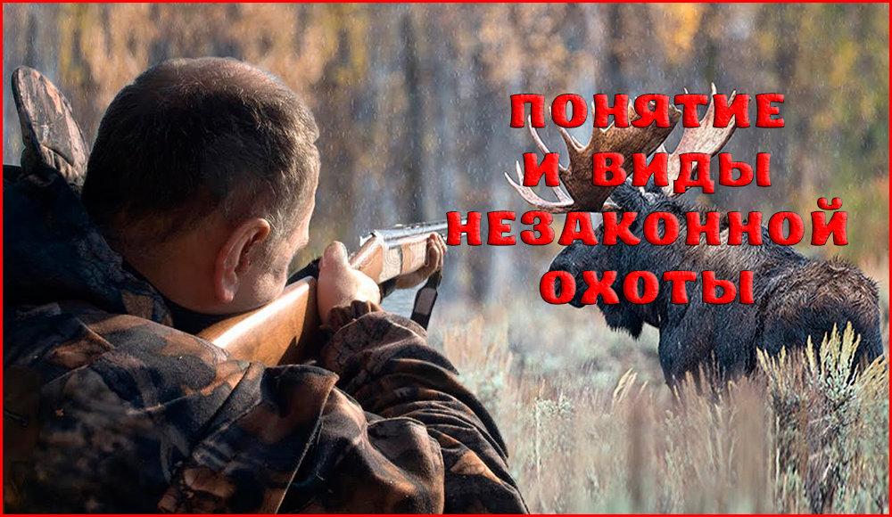 Понятия и состав статьи 258 УК РФ – незаконная охота