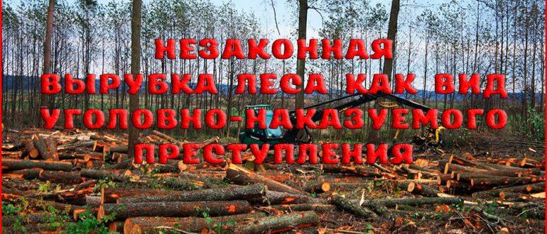 Уголовная ответственность за незаконную вырубку леса